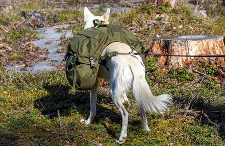 hund og kløving